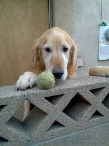 cute-dog-wants-to-play-ball