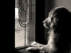 photograph-pets-4